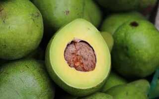 Можно или нет при панкреатите авокадо