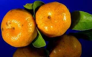 Норма мандаринов в день