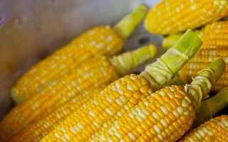 Кукурузу во время грудного вскармливания