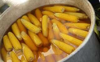 Все о кукурузе