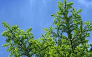 Штрафы за срубленную елку в лесу