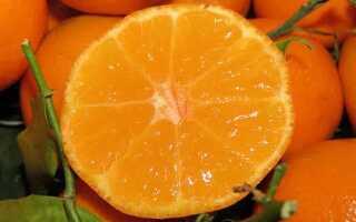 Отличие между клементинами и мандаринами