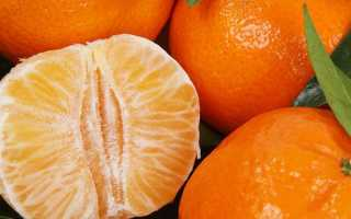 Страна родина мандаринов