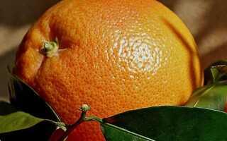 Можно ли мандарины при похудении