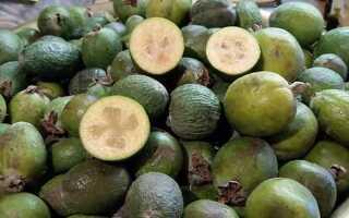 Зеленый фрукт фейхоа
