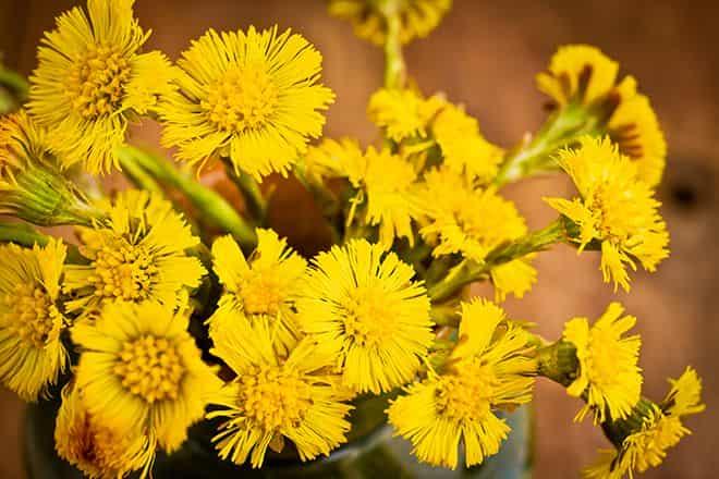 foto-cvetkov