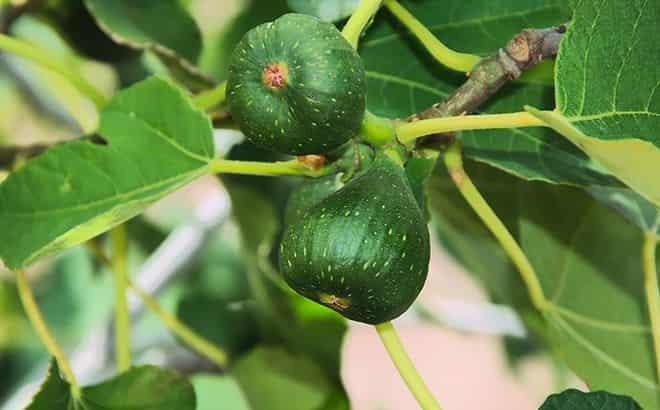 frukty-moyut