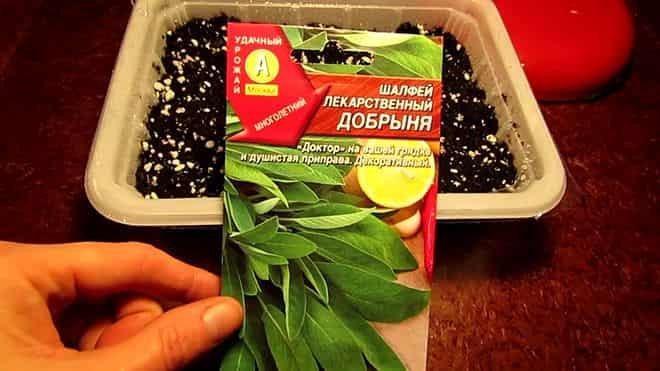 semena-pomestit