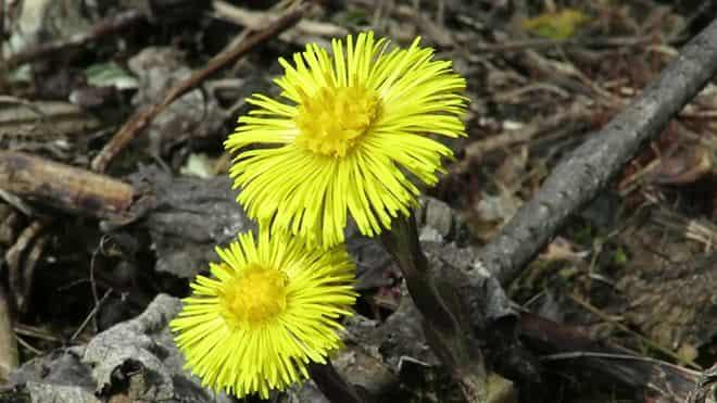 zheltye-cvety