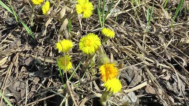 zhivye-cvety