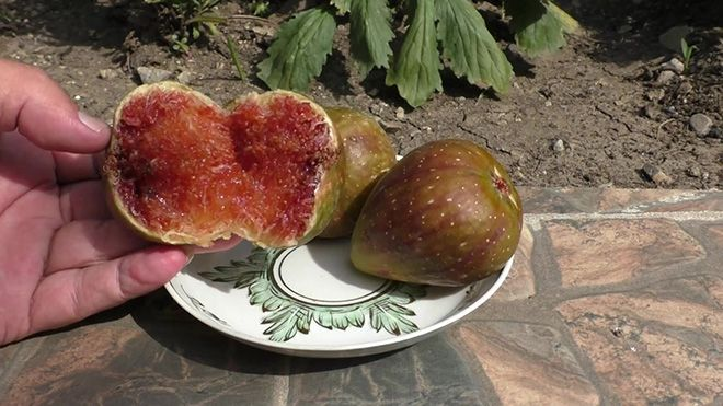 osennie-plody