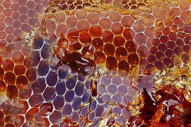 Перечень рецептов и полезных свойств калины с медом