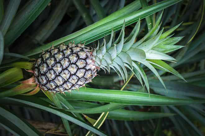 vidov-fruktov