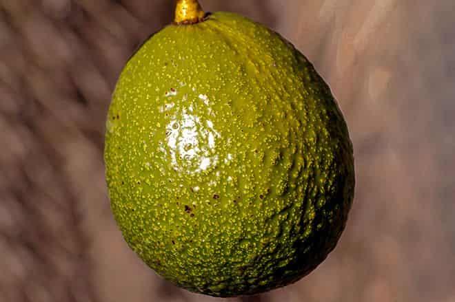 frukt-potryasti