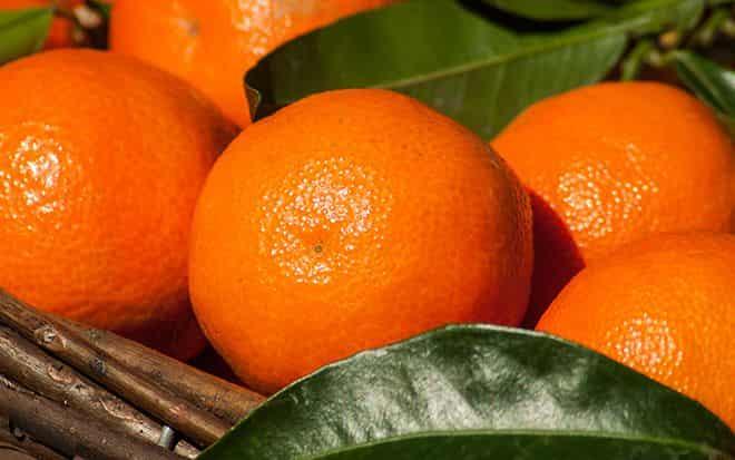 neskolko-plodov