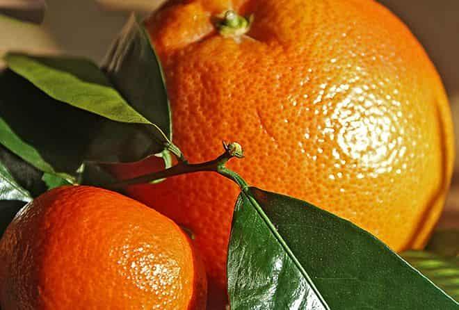 citrusovye-plody