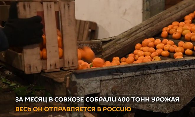 sozrevaniya-plodov