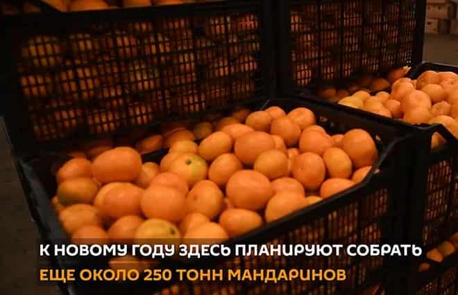vidy-fruktov