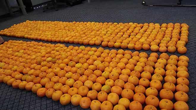 sorta-mandarinov