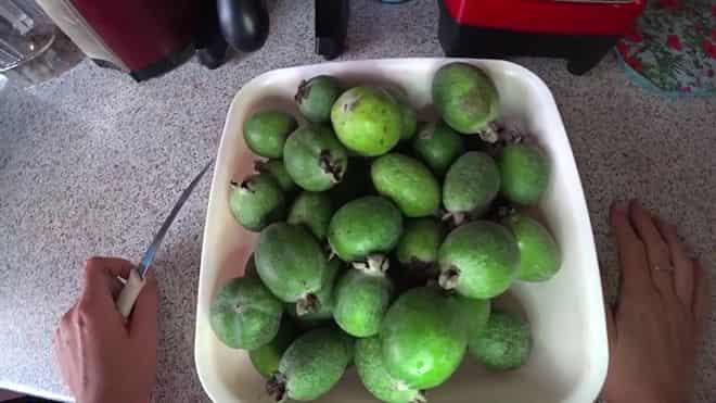 ananasovaya-guava