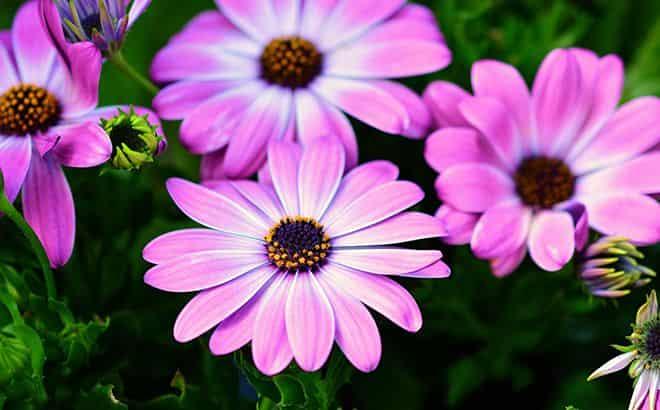 bolshoe-cvetolozhe