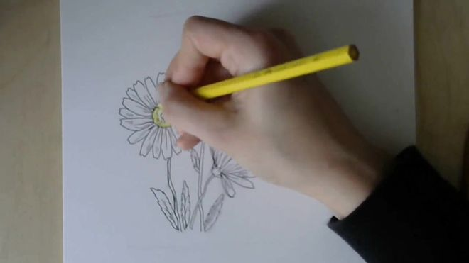 cvetok-romashka