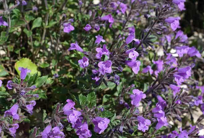 fioletovogo-ottenka