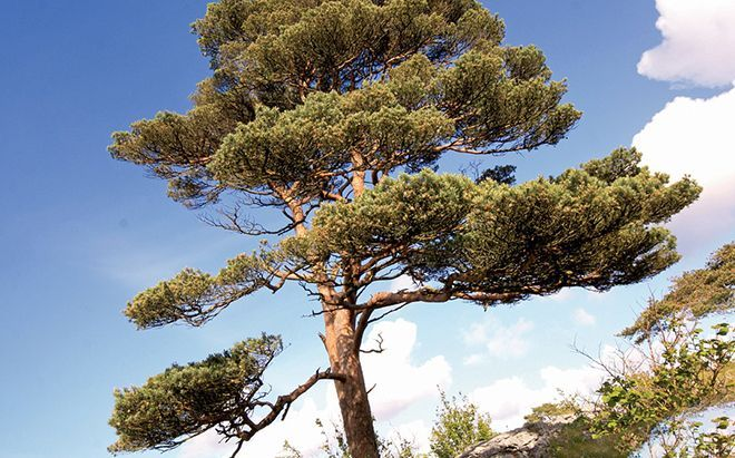 drevesnyh-rastenij