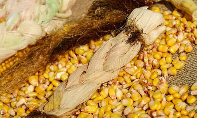 kalorij-v-kukuruze