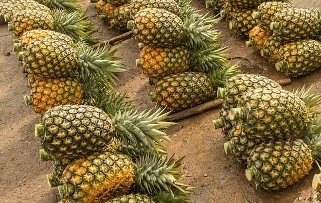 svezhij-ananas-mozhno