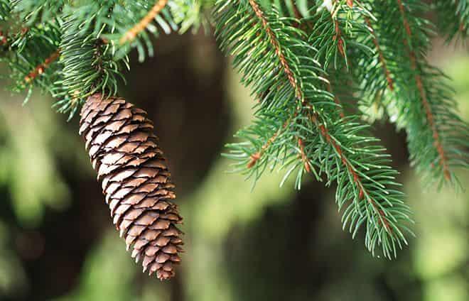 drevesnye-rasteniya